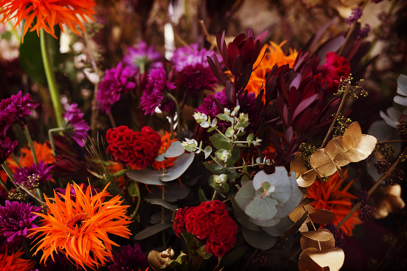Flower_IMG_6133